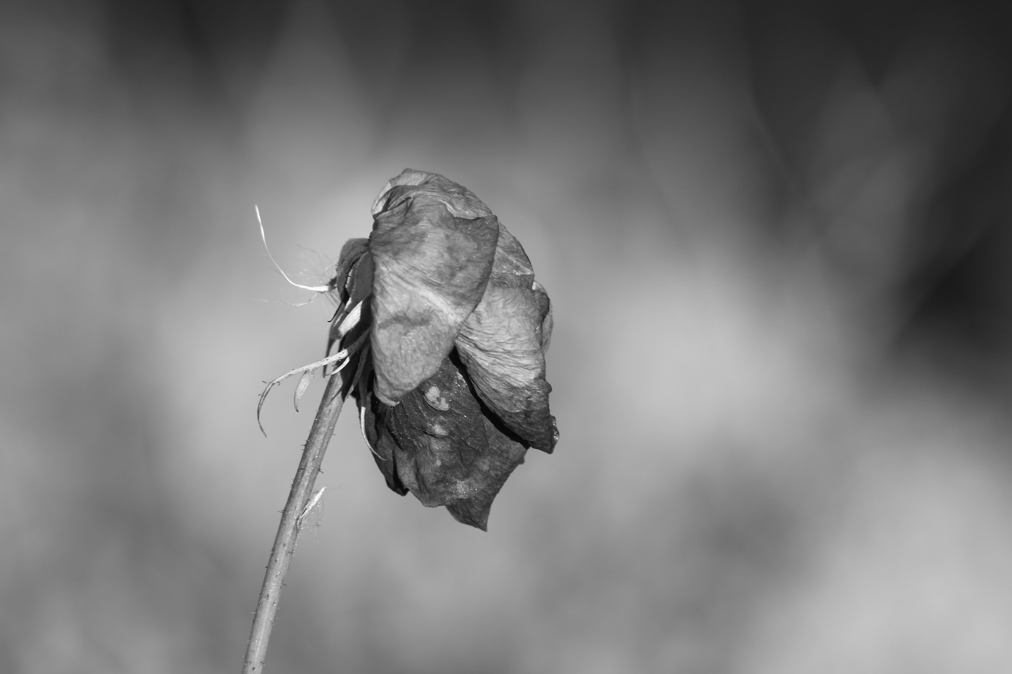 Photograph waiting for spring  by Paola Fiore on 500px