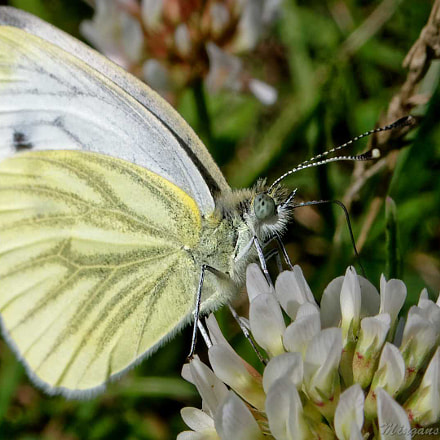 just a butterfly, Panasonic DMC-TZ101
