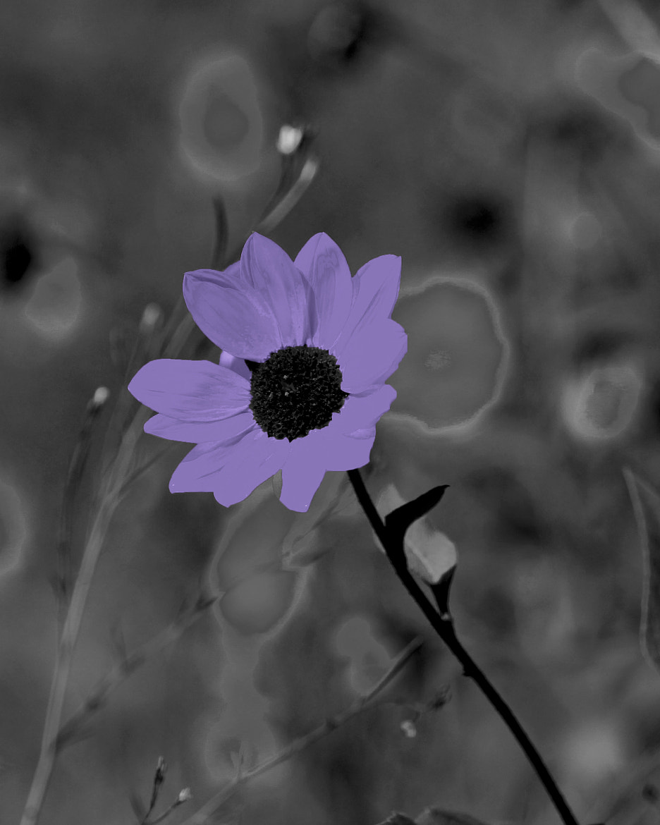 Photograph One Purple Flower by Johnny Smith on 500px