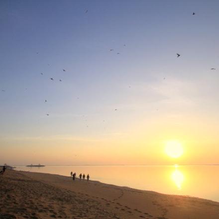 morning birds, Canon EOS 60D