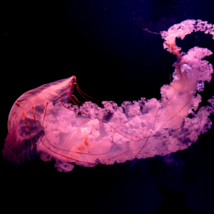 jellyfish-水母, Fujifilm X20