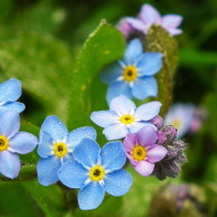 blue flower, Fujifilm FinePix HS10 HS11