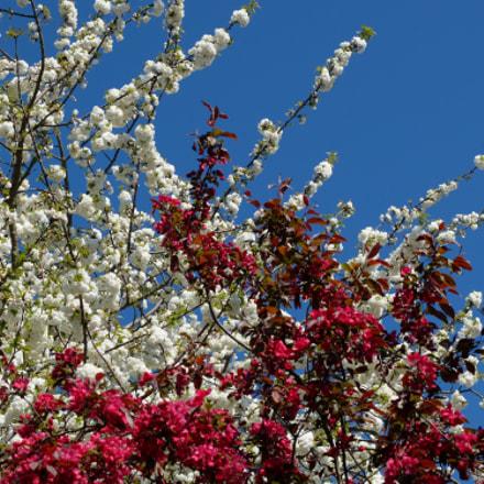 Colourful Spring Blossom, Fujifilm X20