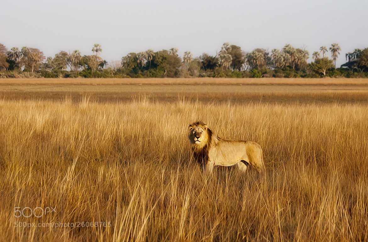 Photograph The King by Sharon Smith on 500px