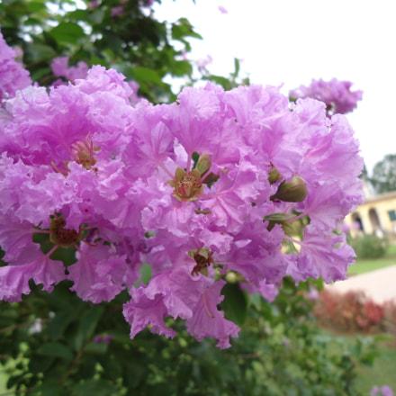 Beautiful Flowers, Sony DSC-W610