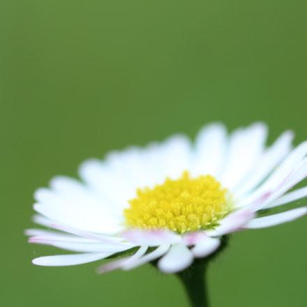 nature, Canon EOS 1200D, Sigma 105mm f/2.8 EX DG OS HSM Macro