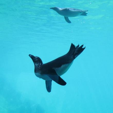 Penguin, Canon IXUS 125 HS
