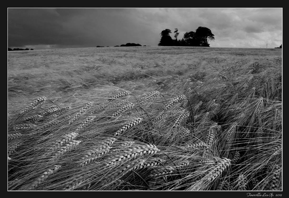 Photograph Sea of wheat by Jean-François Boulet on 500px