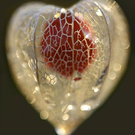 the heart, Nikon D800, AF Micro-Nikkor 60mm f/2.8D
