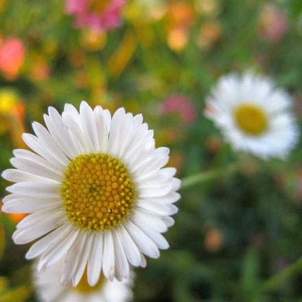 Flower, Canon DIGITAL IXUS 80 IS