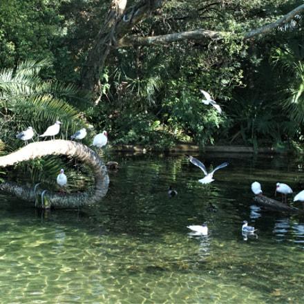 Birds by Serene Stream, Sony ILCE-6000, Sony E 18-55mm F3.5-5.6 OSS