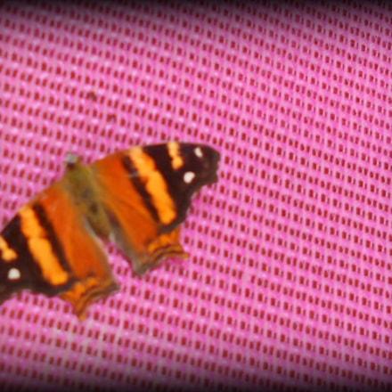 Muerte en colores., Nikon COOLPIX S3100