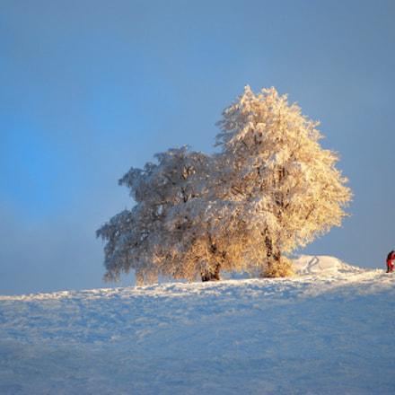 Winter, Nikon D80, AF Zoom-Nikkor 80-200mm f/2.8 ED