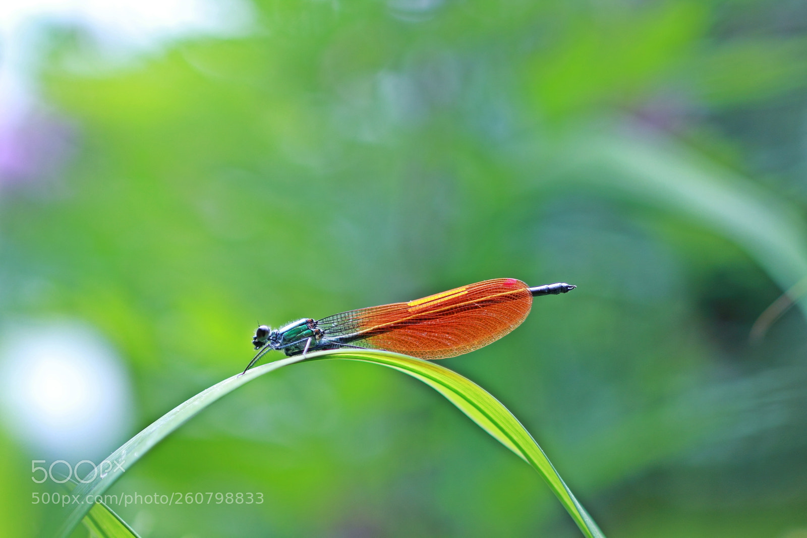 Summer Color, Canon EOS 60D, Canon EF 100mm f/2.8 Macro
