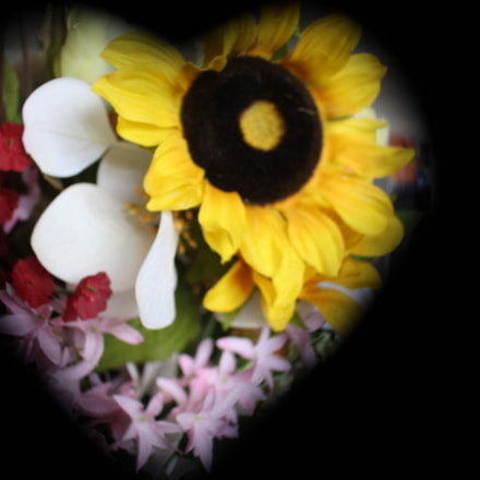 heart of flowers, Canon EOS REBEL SL1, Canon EF-S 18-55mm f/3.5-5.6 IS STM