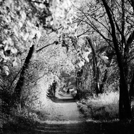 Path under the trees, Sony SLT-A57, Minolta AF 50mm F1.7
