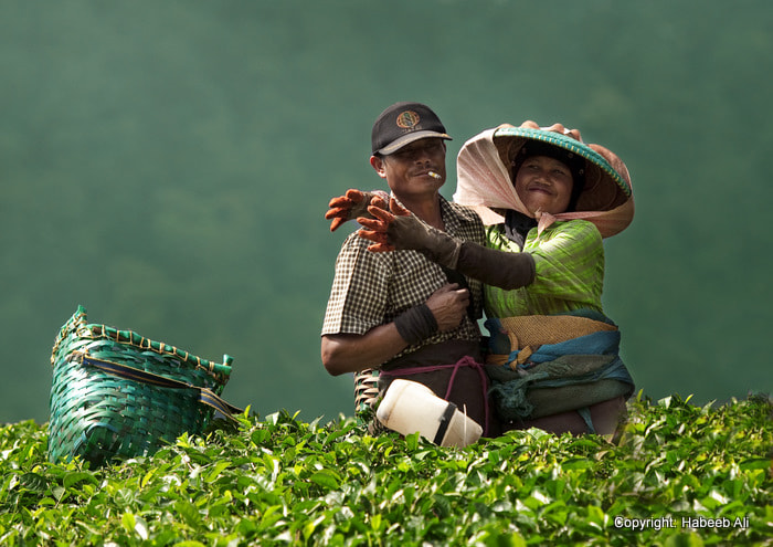 Photograph Happiness in Tea farm by Habeeb  Ali on 500px