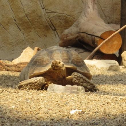 Turtle, Canon IXUS 125 HS