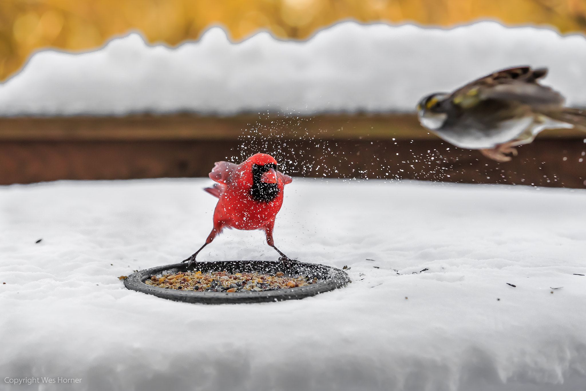 Photograph Fly The Coop by Wes Horner on 500px