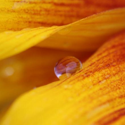 Just a Drop, Canon EOS REBEL T5I, Canon EF 100mm f/2.8 Macro USM