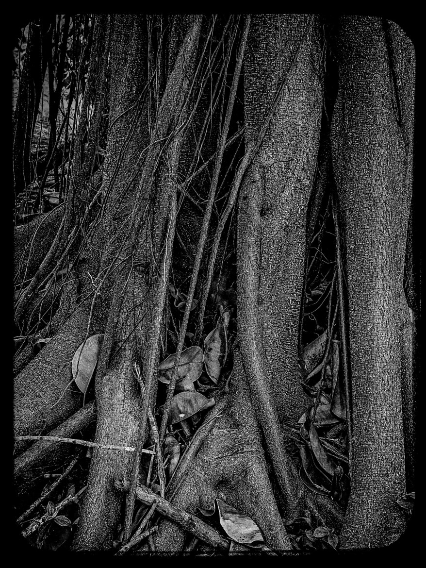 Photograph 2013P52B&W 7/52: A Tangled Web... by Paul Howard on 500px