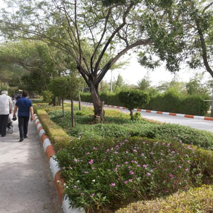 Birds Garden, Samsung Galaxy Grand Duos