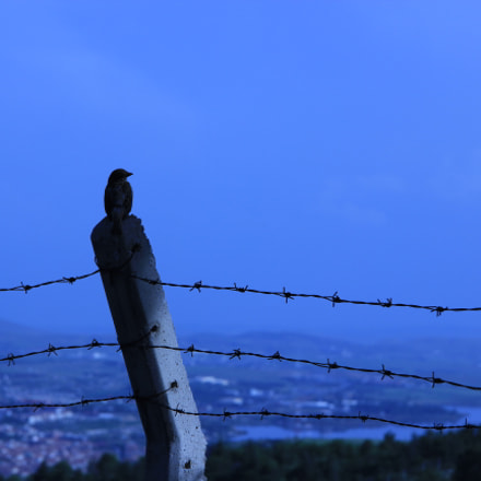 Ego, Canon EOS 550D, Canon EF-S 18-135mm f/3.5-5.6 IS