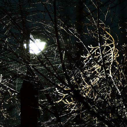 It's spring. Night. Blizzard. Весна. Ночь. Круговерть, Nikon D7000, AF Nikkor 85mm f/1.8D