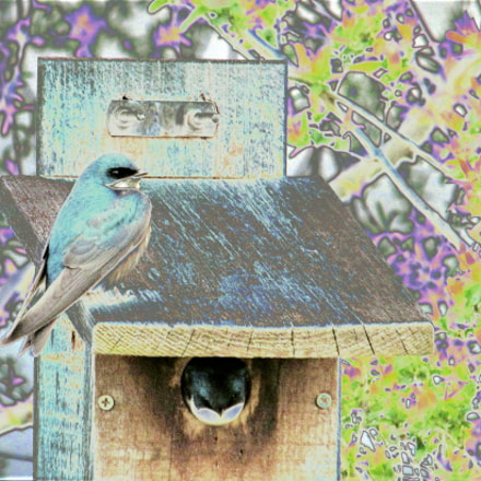 Bird House, Canon POWERSHOT SX150 IS