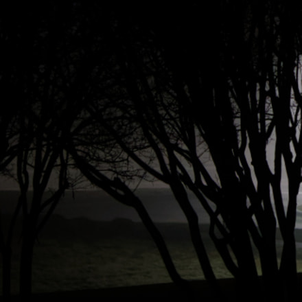 Trees at Night in, Canon EOS REBEL T7I