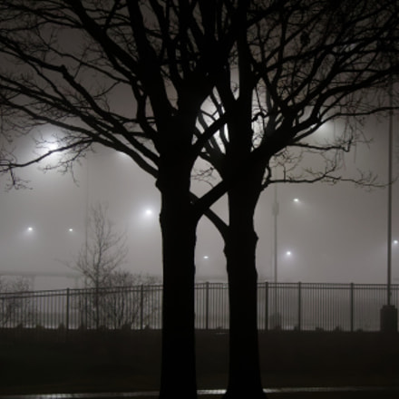 Tree Couple in Fog, Canon EOS REBEL T7I