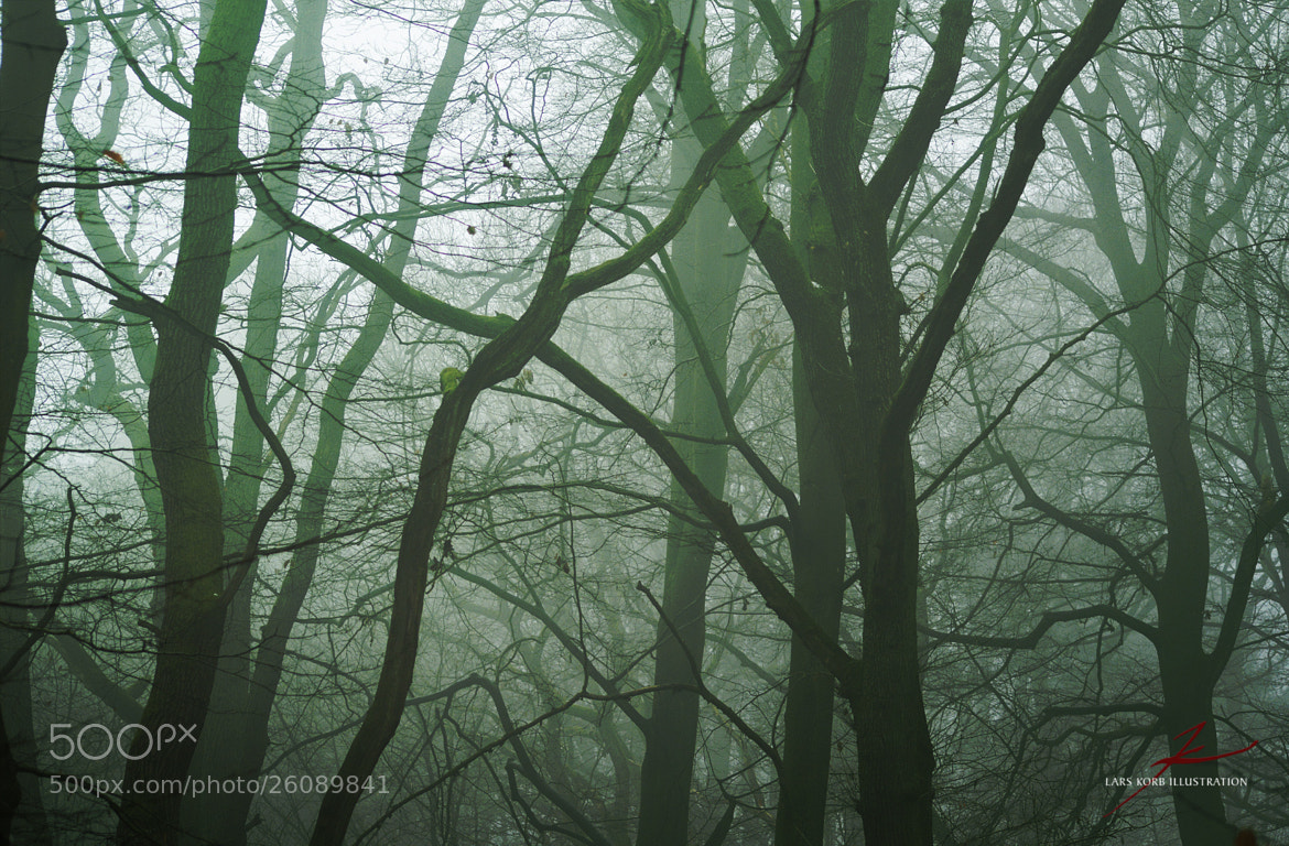 Photograph Deep In The Woods by Lars Korb on 500px