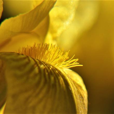 Flower, Nikon D810, AF-S Nikkor 85mm f/1.8G