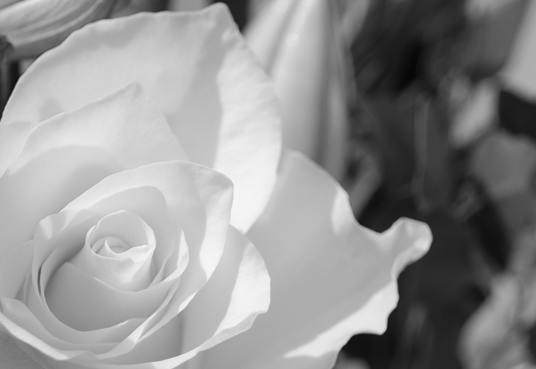 Photograph 45-365 - petal by Gary   on 500px