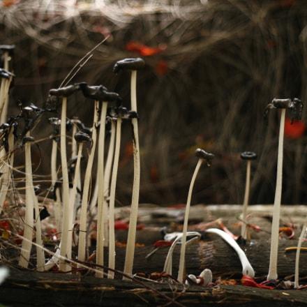 Vanishing Mushroom, Canon EOS 30D, Canon EF 50mm f/1.8 II