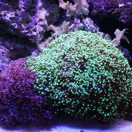 Stunning underwater garden, Canon EOS REBEL T7I, Canon EF-S 18-135mm f/3.5-5.6 IS STM