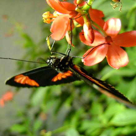 Butterfly, Sony DSC-S780
