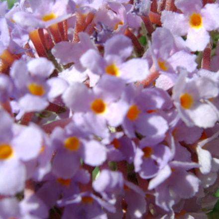 Flower, Sony DSC-S780