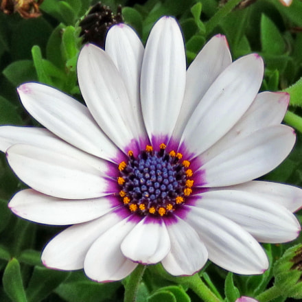 A White And Purple, Canon POWERSHOT SX60 HS, 3.8 - 247.0 mm