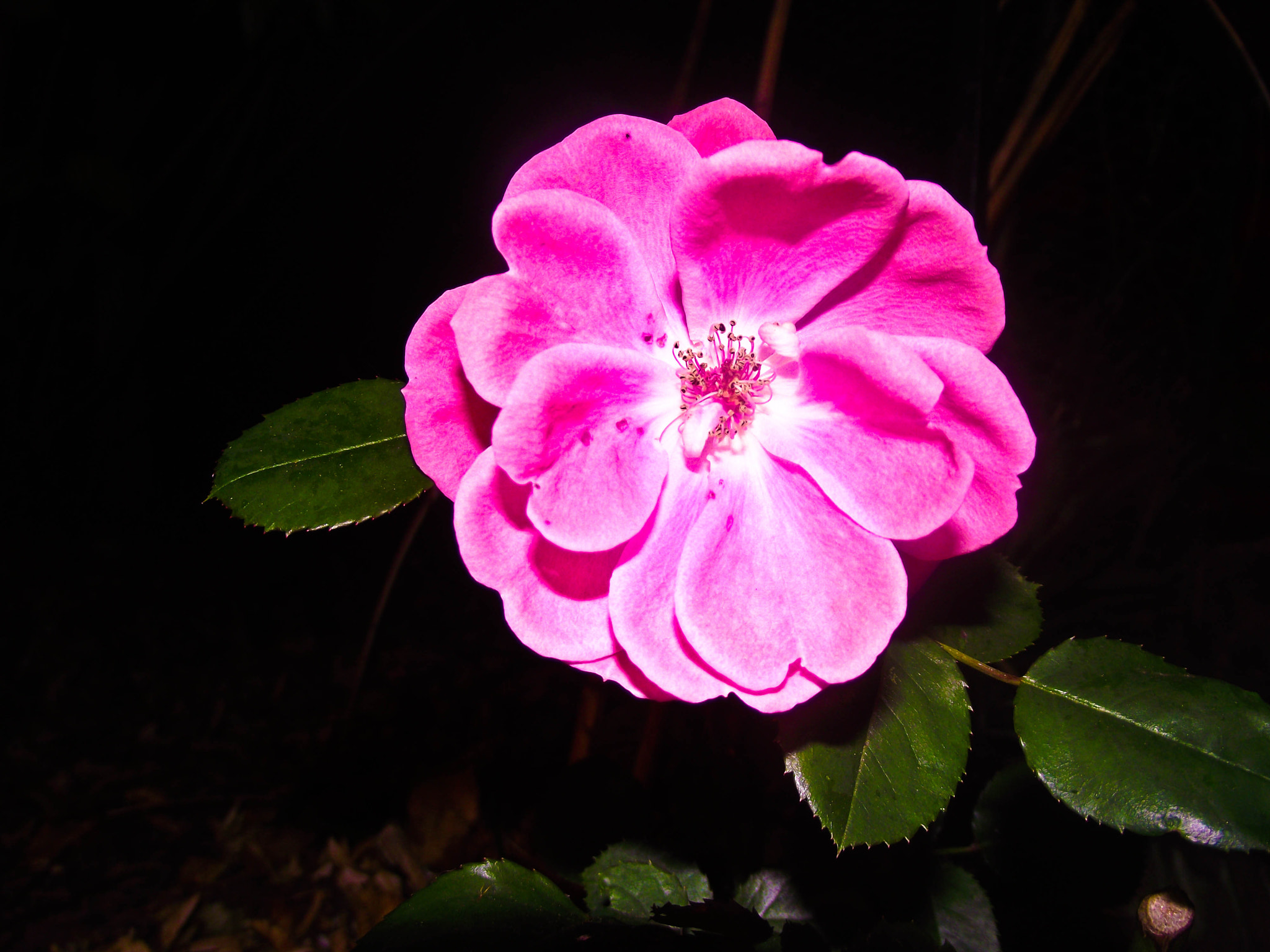 Photograph Flower in the Dark by Phil Purcell on 500px