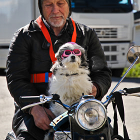 Old dog New tricks by Daniel Solstrand (danielsol)) on 500px.com