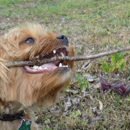 My stick, Nikon COOLPIX L340