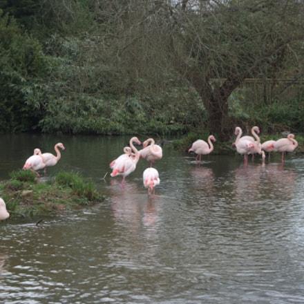 Flamingos at Bird Sanctuary, Fujifilm FinePix S5Pro
