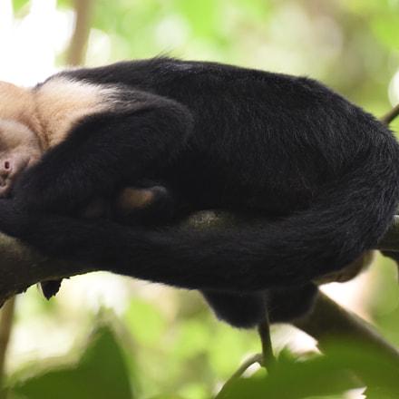 Siesta time. Costa Rica, Nikon D810, Tamron SP 70-300mm f/4-5.6 Di VC USD (A005)