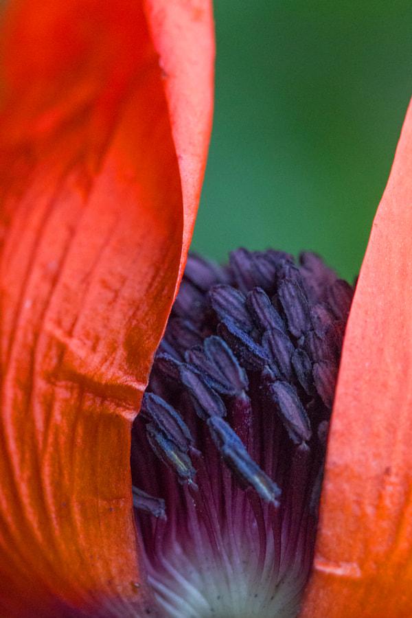 Lever de rideau (curtain raiser) de Christine Druesne sur 500px.com