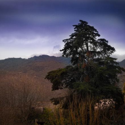 L'albero, Fujifilm FinePix S1000fd
