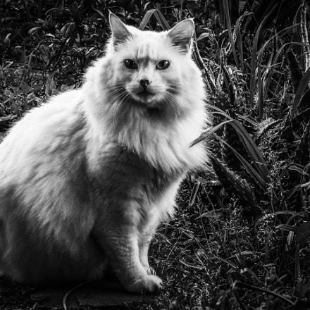 Monochrome Cat, Sony DSC-H2