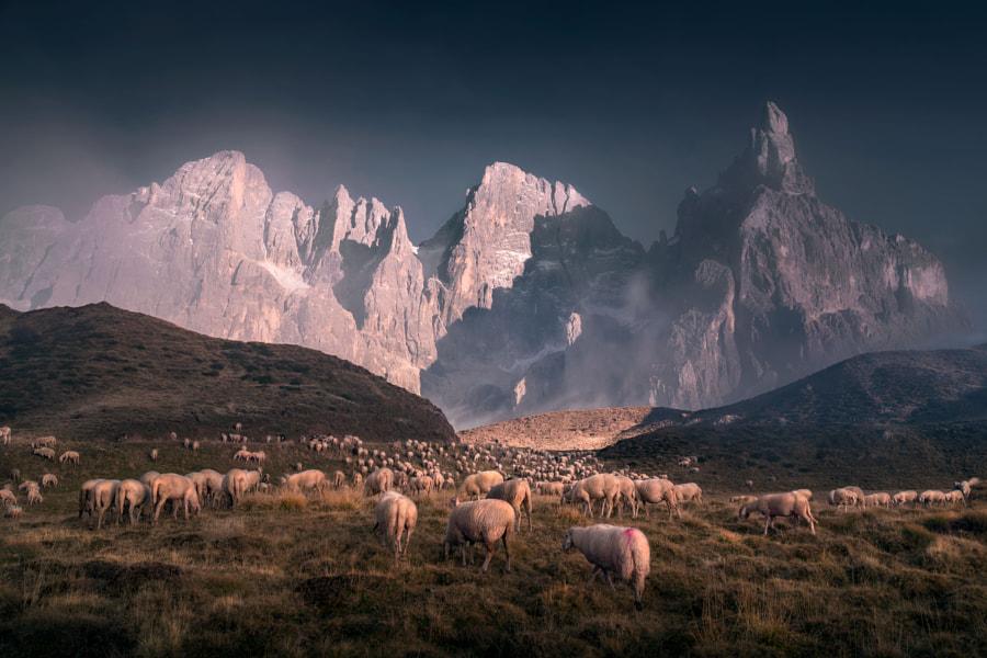 Herd by İlhan Eroglu on 500px.com