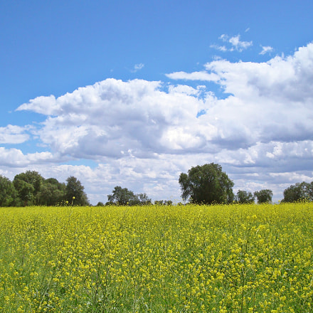 Valle de flores, Sony DSC-W90