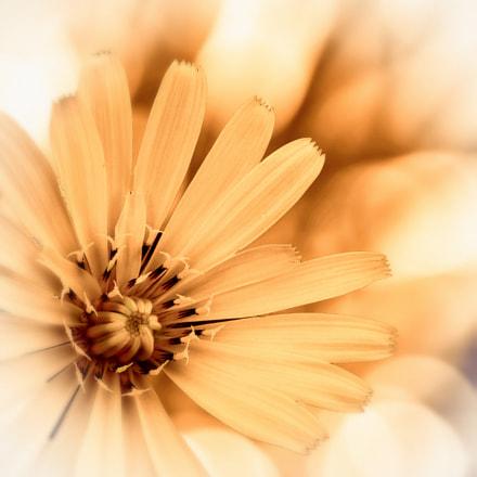 Una flor, Sony DSC-H10